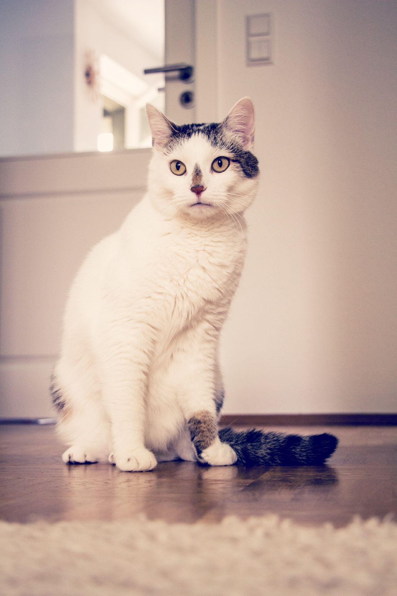 Cat I Love My Cat Cats Cat♡ Great Love Big Love