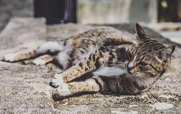 Eyüp Cemetary Cat Istanbul