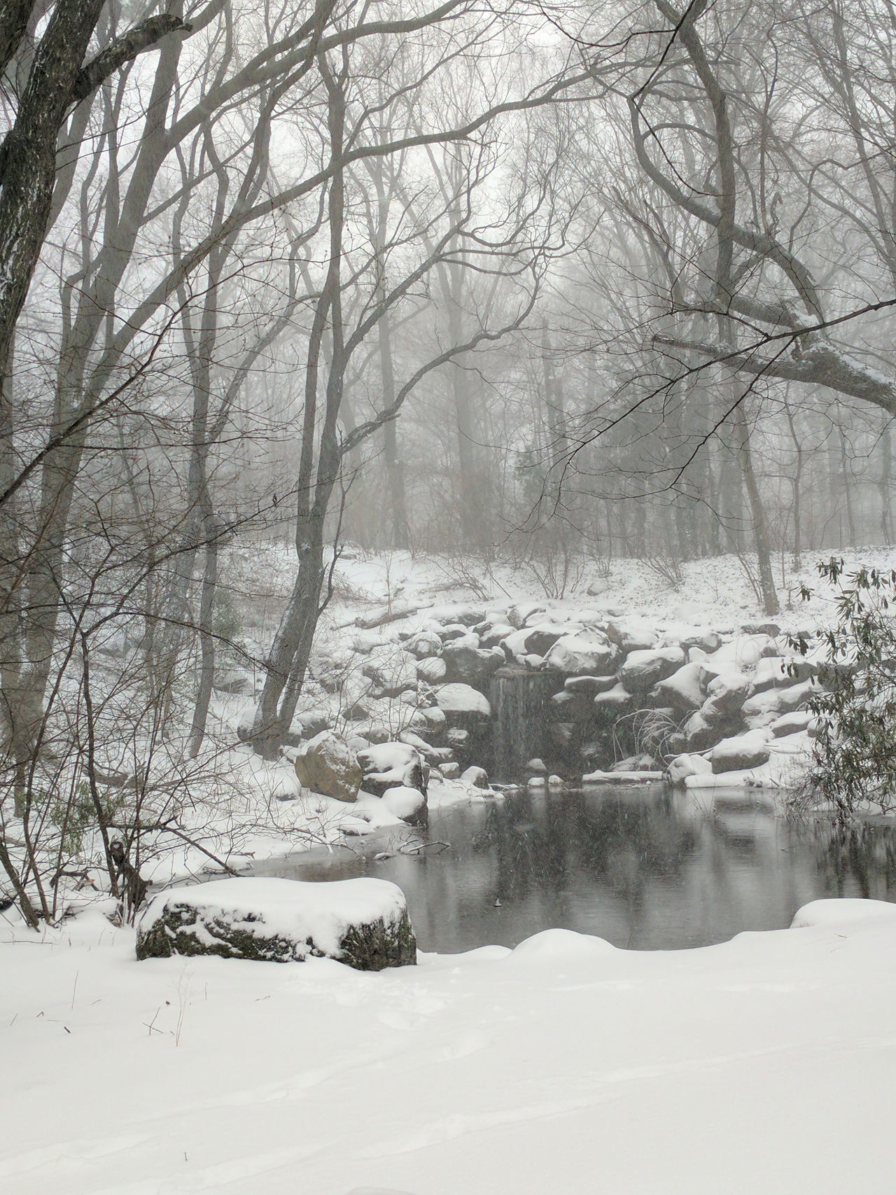 Almost Black&white Brooklyn City Park Nature Park Prospect Park Snow Snowscape Snowstorm2016 Trees Urban Nature Waterfall White Whiteout Winter