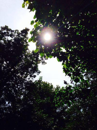Sun Light Tree Summer Chilling In The Sun