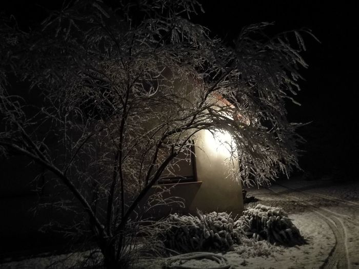 Tree Night Nature No People Winter Outdoors Beauty In Nature