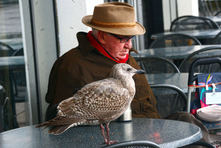 Seagull and man at Lonsdale Quay in North Vancouver B.C. Lonsdale Quay Seagull North Vancouver Hat One Person One Man Only Business Finance And Industry Adult Bird Only Men Outdoors Men