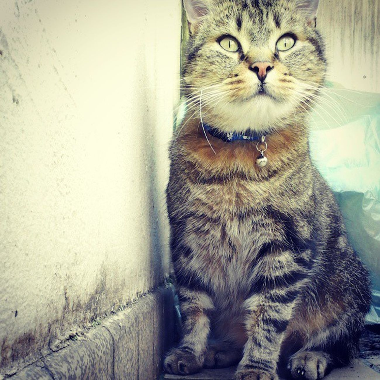 My baby Cats Love BIG Chieur tigre tiger little beautiful <3