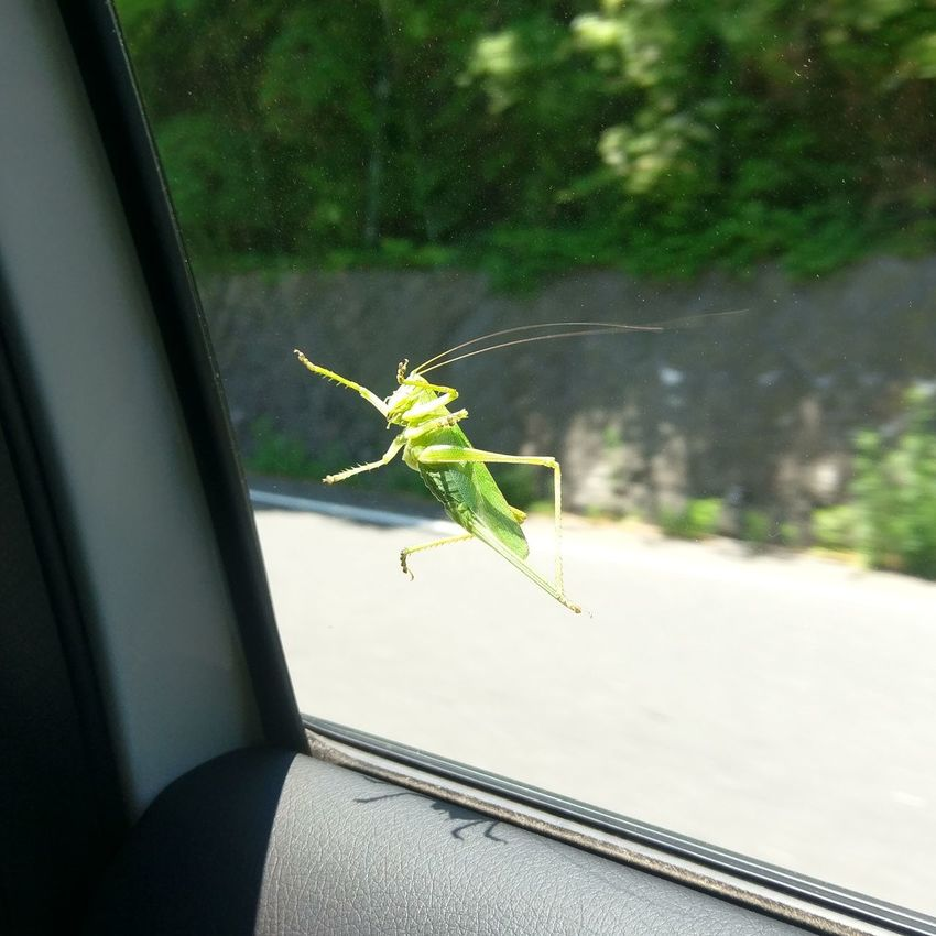 Insect No People Outdoors Nature Locust Drive Glasshopper