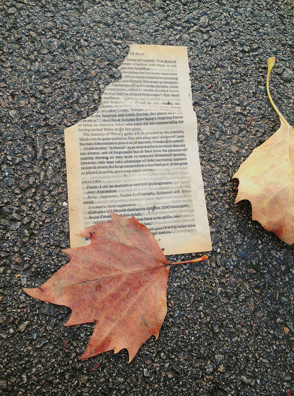 I saw this as I walking in the park. It makes me quite sad to see torn books. High Angle View Autumn Leaves Parks Park Torn Book Phone Camera Textured  Fallen Leaves Fall Leaves Close-up Outdoors Day No People Page Paper Book Eye4photography  EyeEm Best Shots Torn Ripped Ripped Paper Ripped in London , United Kingdom EyeEmNewHere
