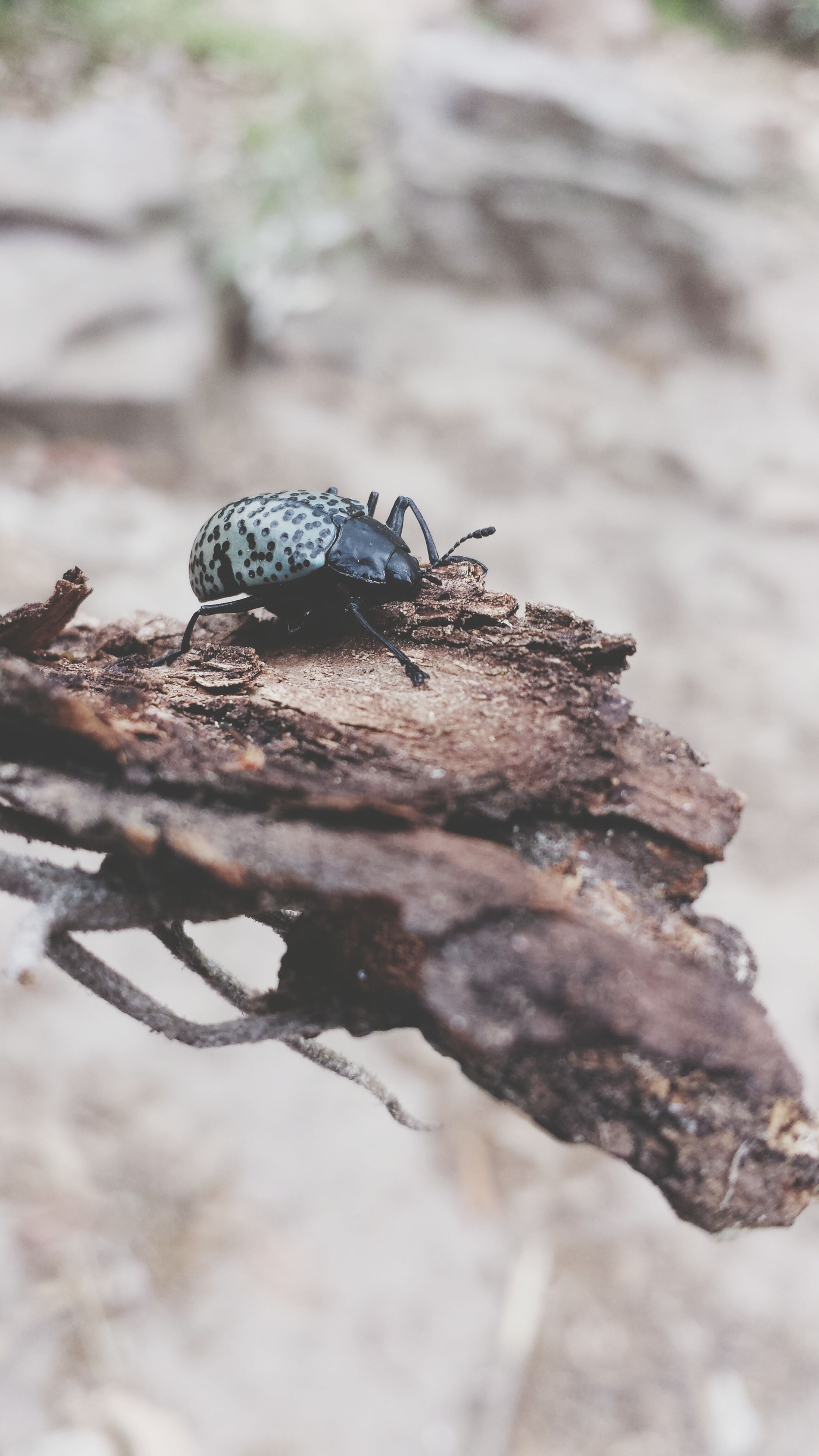 close-up, focus on foreground, one animal, nature, animal themes, natural pattern, animals in the wild, insect, selective focus, wildlife, outdoors, dry, day, fragility, no people, beauty in nature, brown, textured, rock - object, dead plant