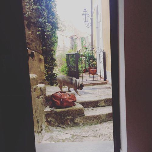 Stopping Time Perfectmoments Lovephotography  Italy Instamoment Dog Relaxing Byby Vintagestyle