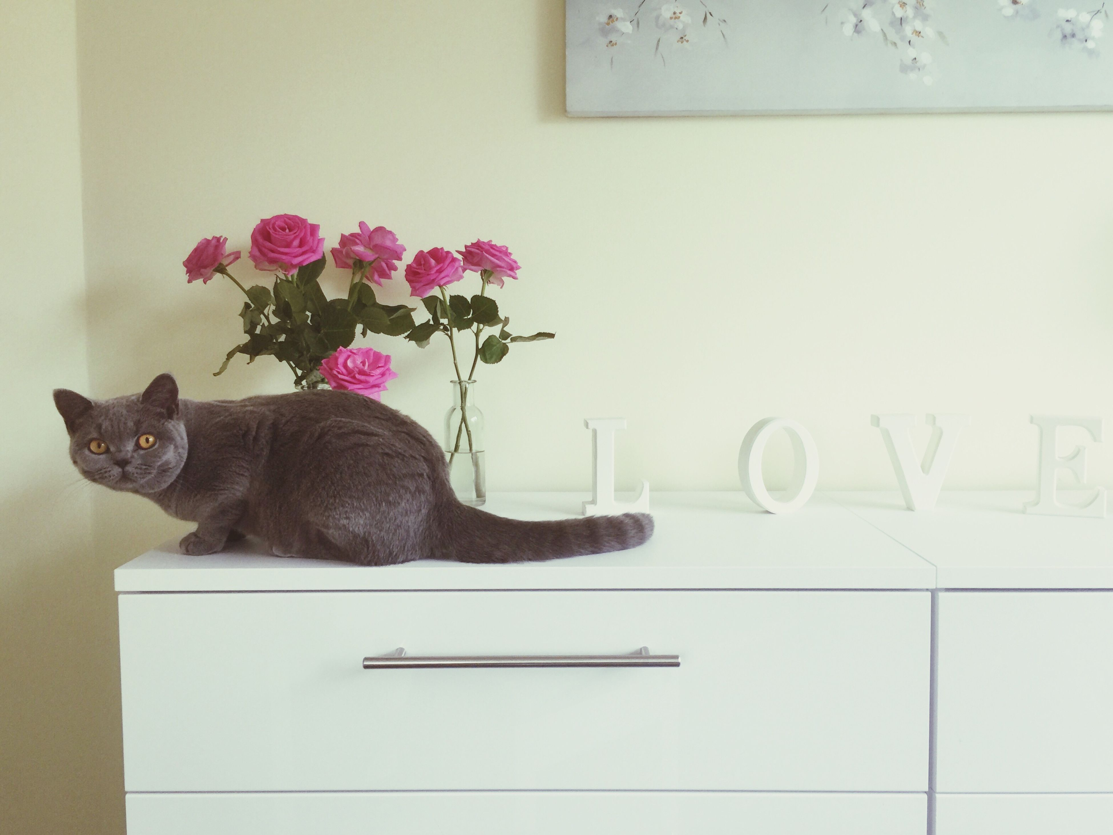 domestic animals, pets, domestic cat, animal themes, one animal, cat, mammal, indoors, feline, flower, wall - building feature, home interior, relaxation, two animals, portrait, window sill, sitting, copy space, full length, no people