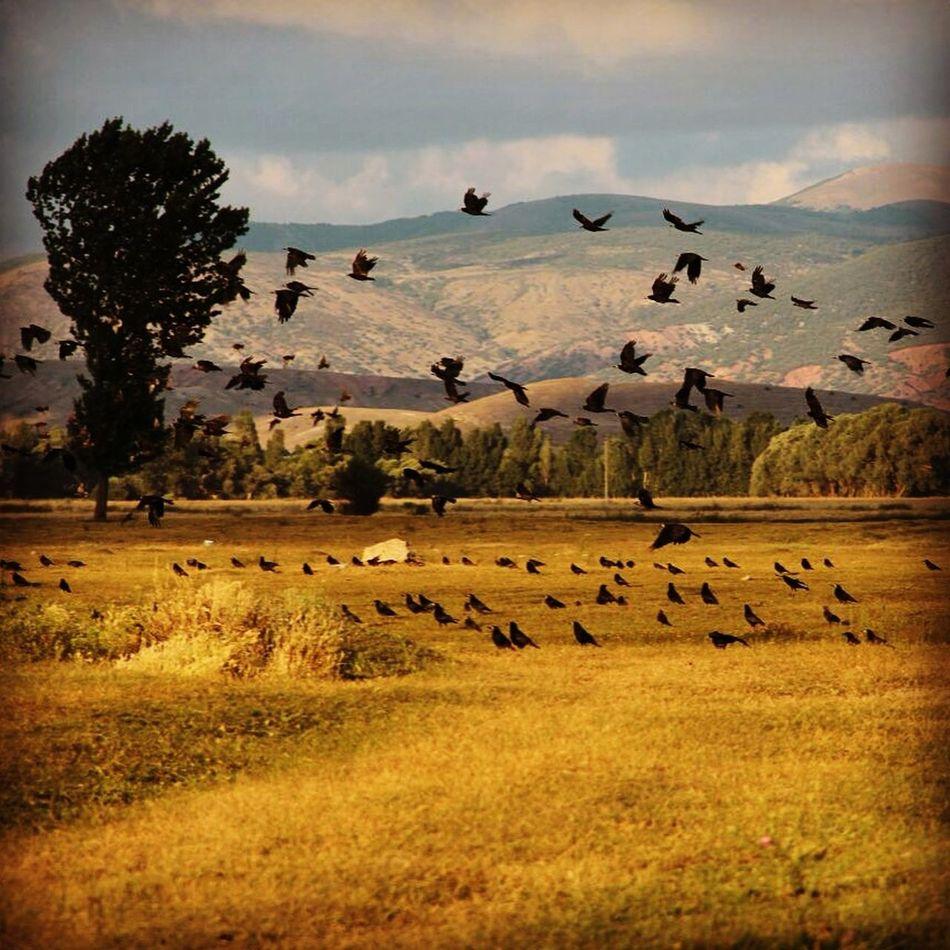 Hayat Kısa Kuşlar Uçuyor