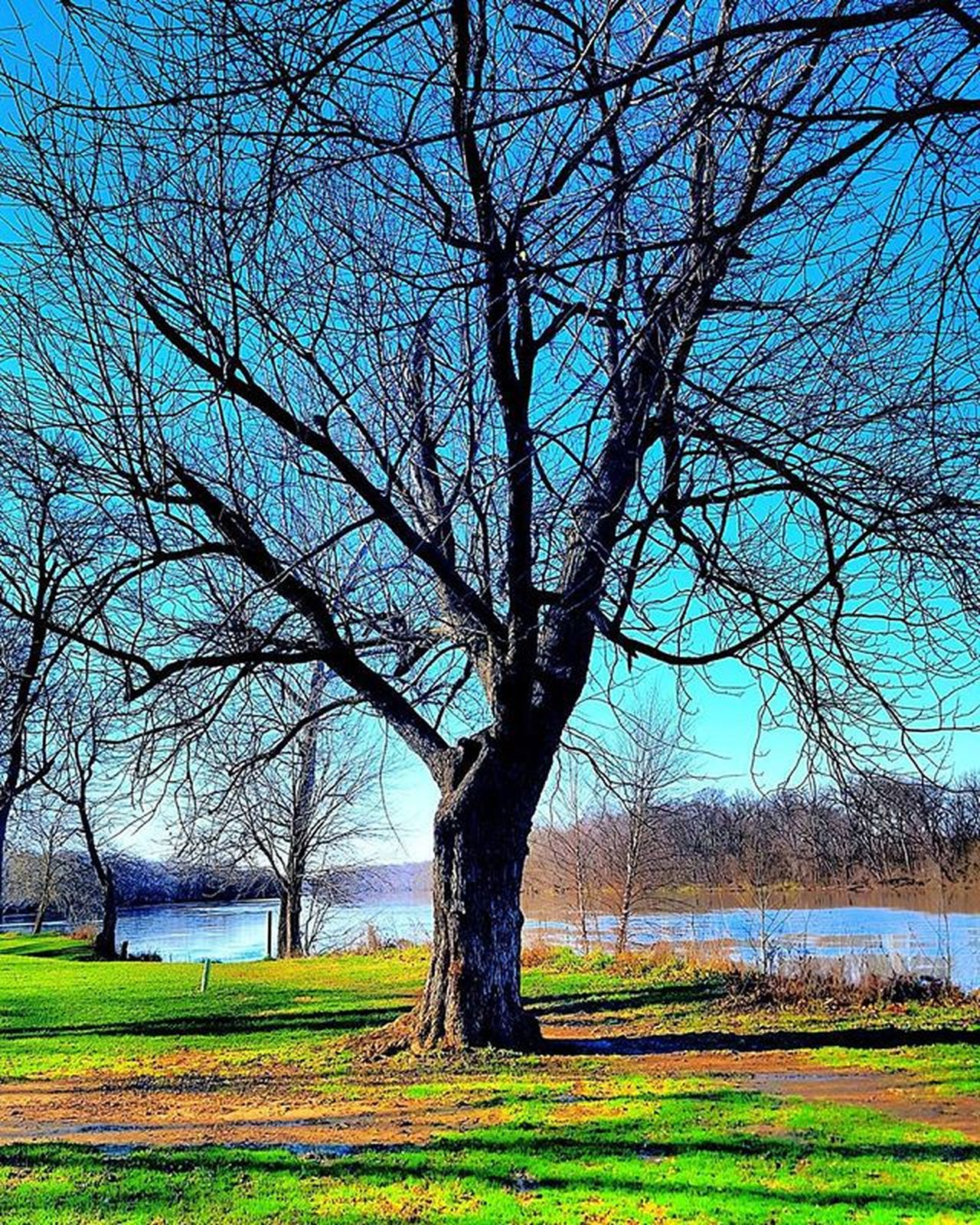Naturephotography Naturelover Nature Landscape Landscapephotography Treelovers Tree Branches Photographylovers Photography Samsungphotography Samsungphoto Samsung Igmasters Igbest Pictureoftheday Picoftheday Brightcolors Bestoftheday Igworldclub IGDaily Bestofinstagram Bestoftheday Lakeview Lake lakeside path aneyeforaphoto 2016