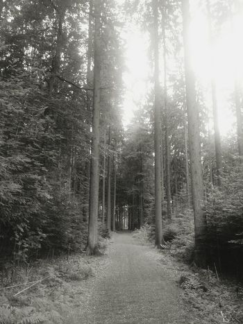 Forest Forestwalk Nature Summer Black And White Germany Hunsrück First Eyeem Photo
