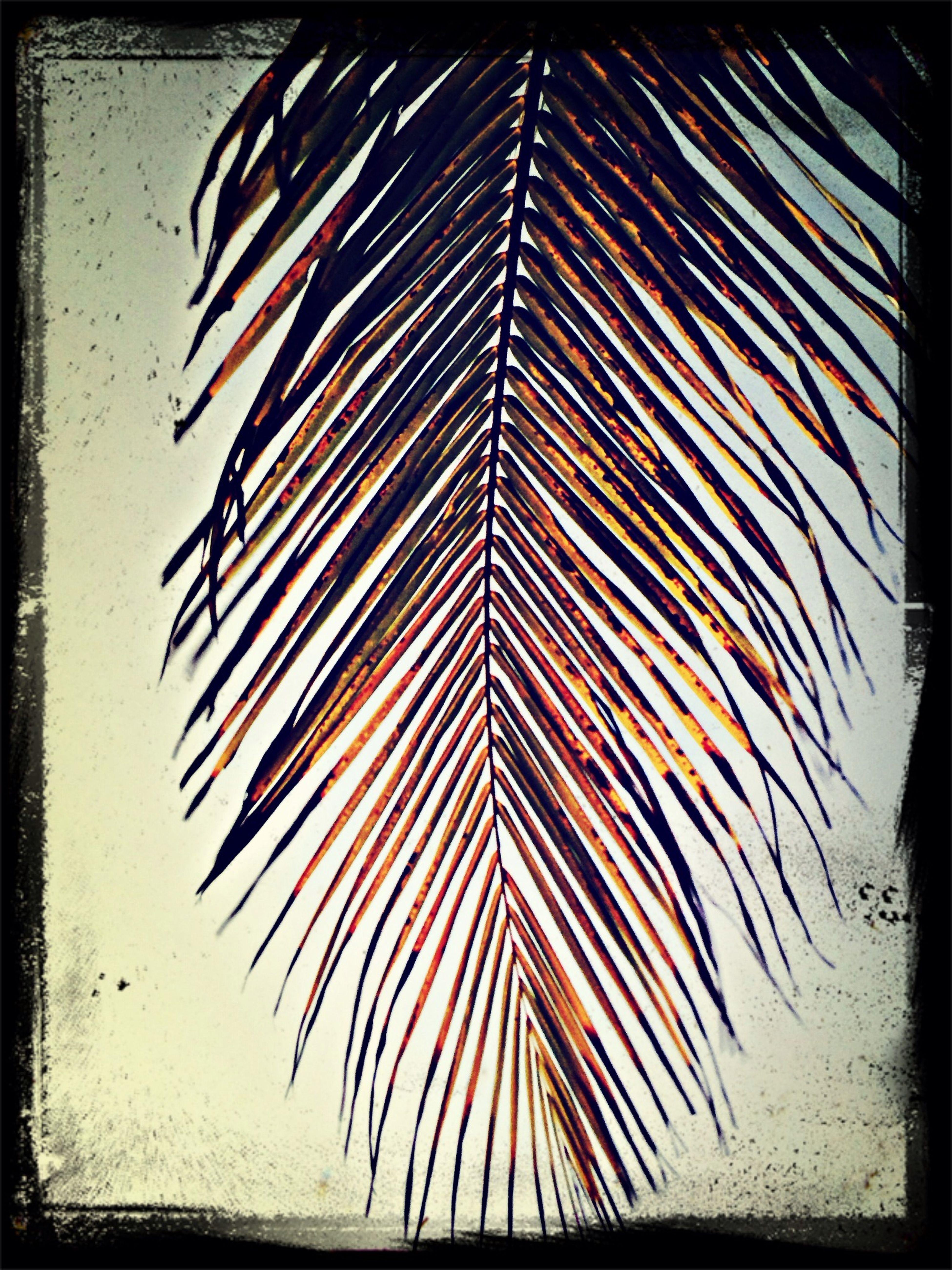 Palm Красота