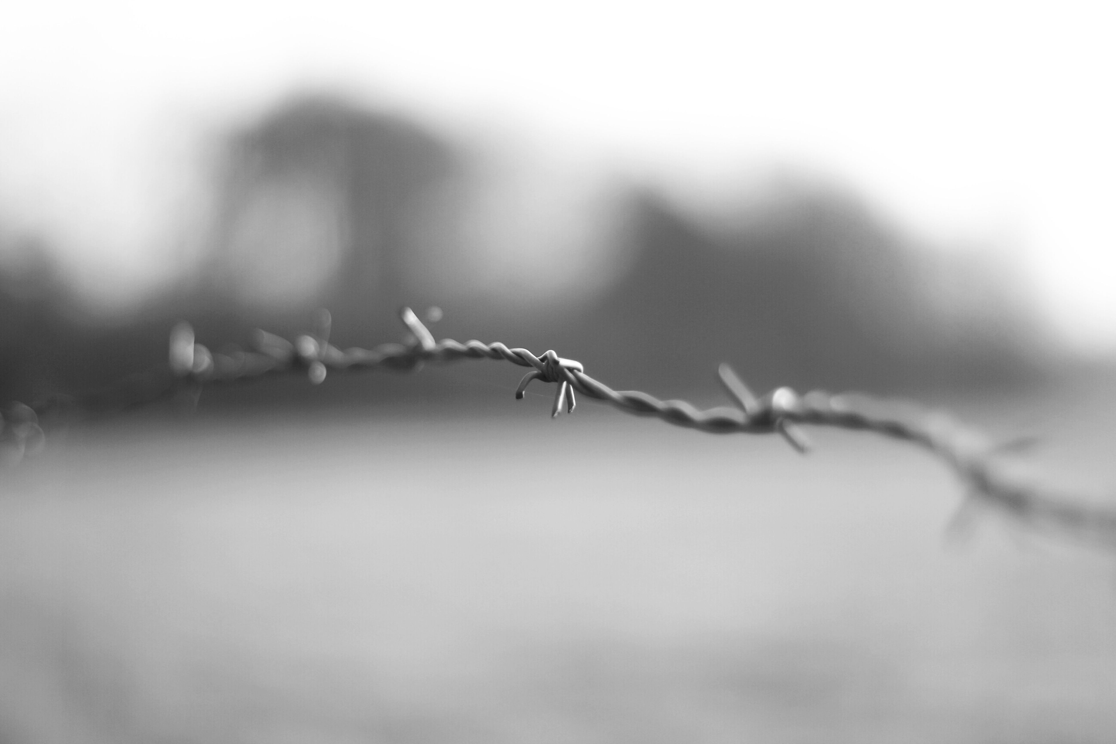 focus on foreground, close-up, barbed wire, twig, selective focus, nature, stem, outdoors, plant, day, insect, no people, fence, protection, safety, spider web, animal themes, branch, sharp, tranquility