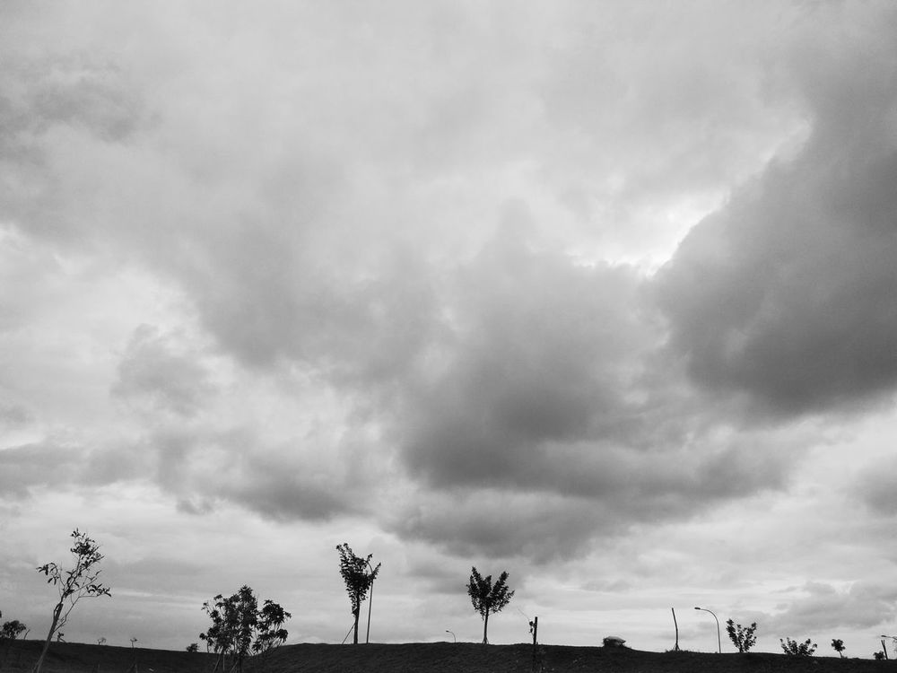 Cloud - Sky Outdoors Sky Nature Day No People Animals In The Wild Beauty In Nature Scenics Tree Storm Cloud