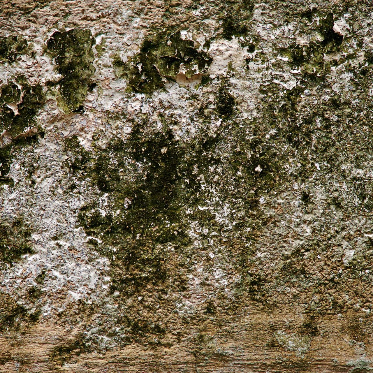 textured, nature, rock - object, full frame, no people, tree, growth, day, outdoors, close-up, water