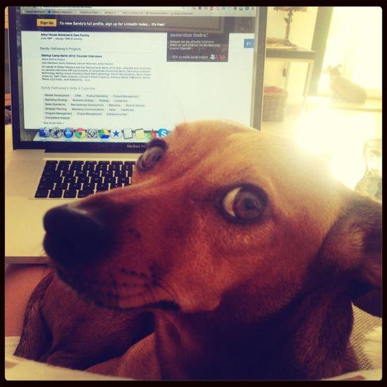 He's helping me work. Dog Sauce & Magoo: The Album