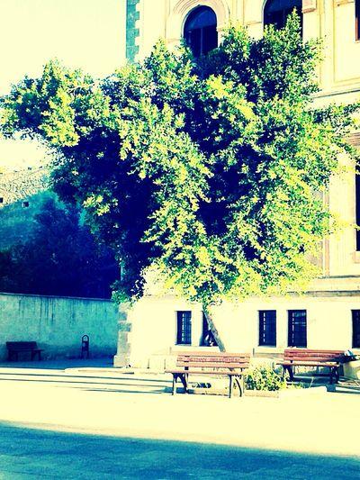 My school :)