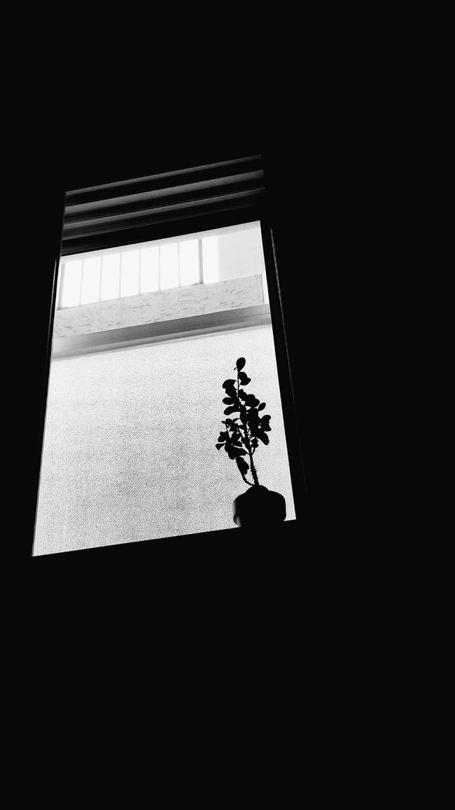 Windows View Tree Flowerpot Blak And Grey In The City