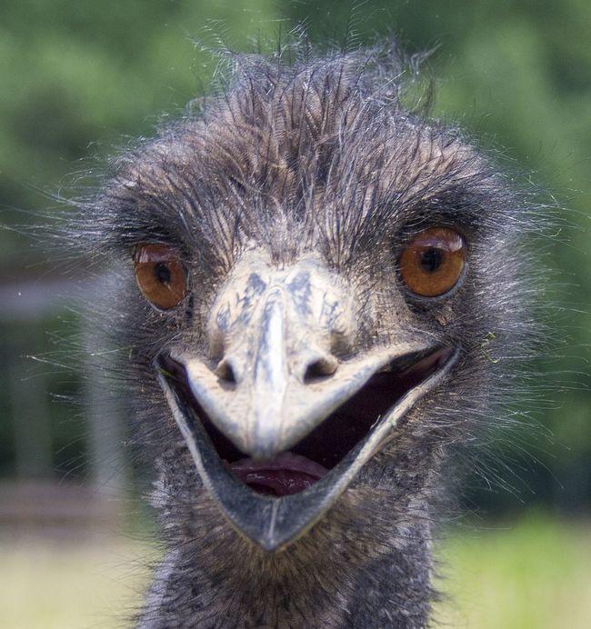 Emu OlympusPEN Olympus