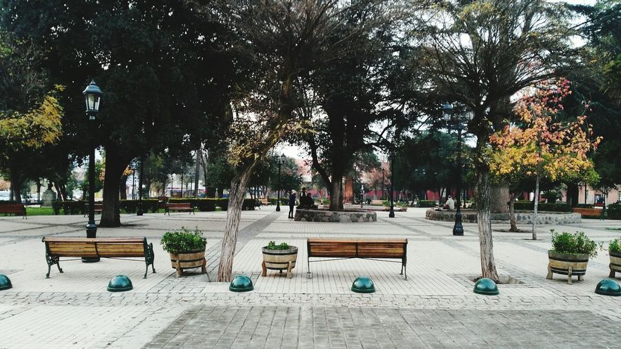 Park - Man Made Space Adapted To The City