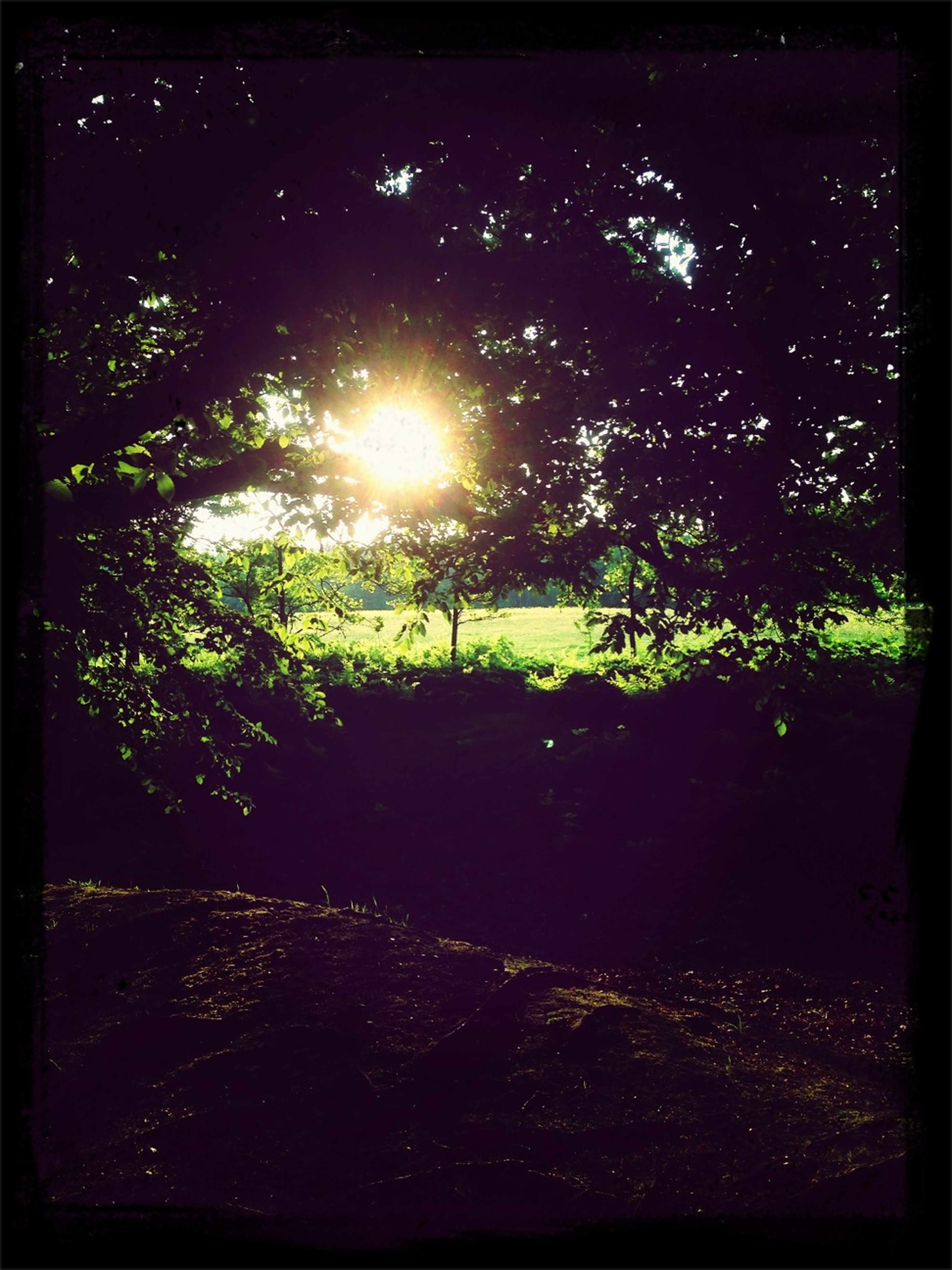 tree, night, transfer print, illuminated, lens flare, auto post production filter, growth, nature, tranquility, sun, beauty in nature, glowing, sunlight, tranquil scene, sunbeam, outdoors, scenics, park - man made space, no people, street light