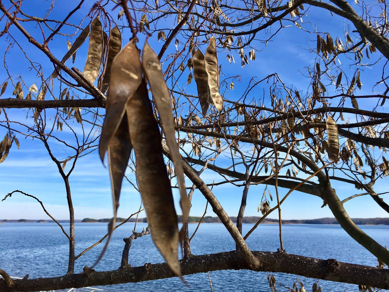 Winter at Lake Lanier Nature Tree Branch Bare Tree Beauty In Nature No People Outdoors Tranquility Day Sky Scenics Water Lake Composition Perspective Blue Color Layers And Textures Layers Blue Sky Seeds Cold Weather Winter