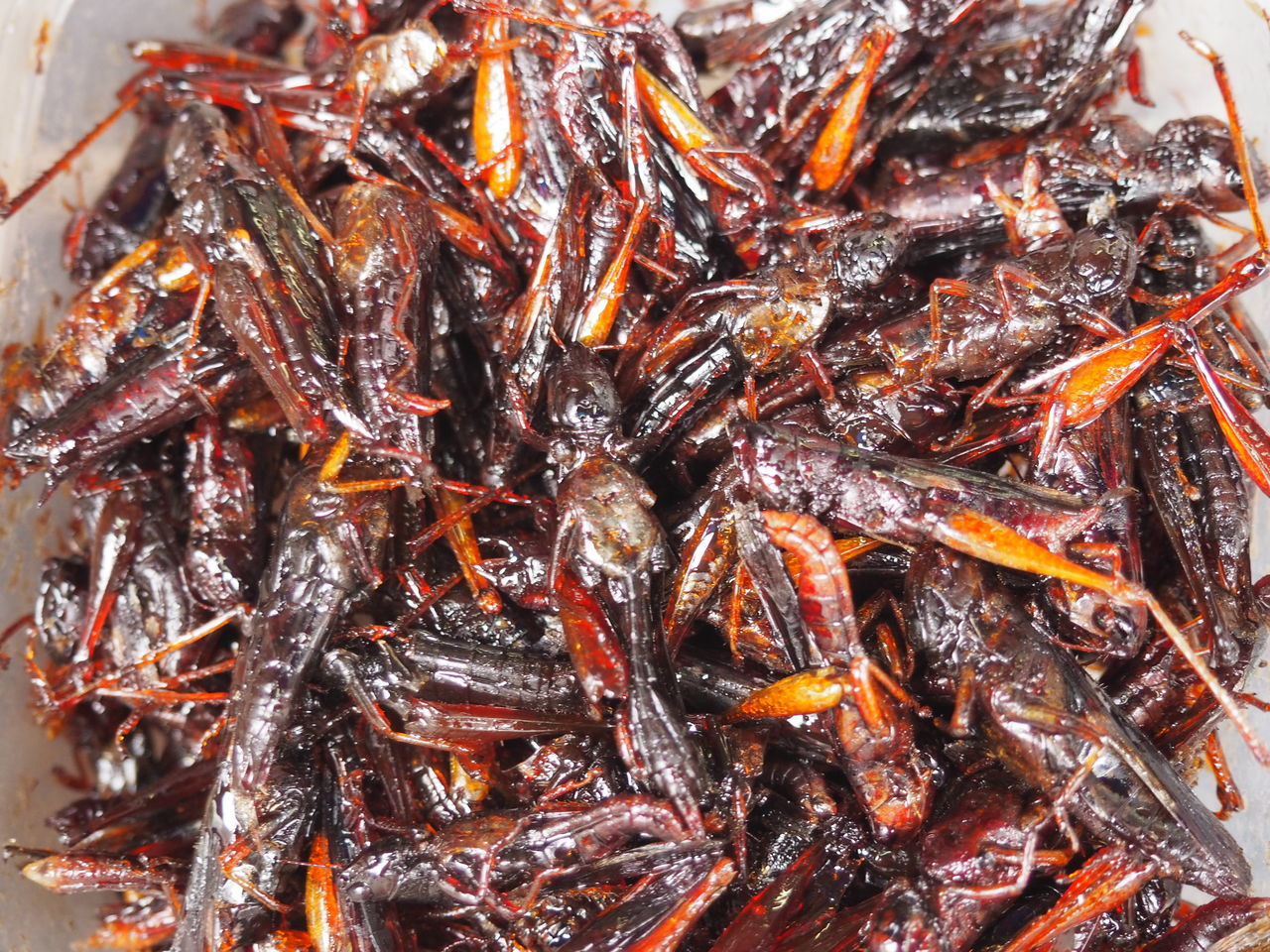 Animal Themes Backgrounds Candied Close-up Day Food Food And Drink Freshness Healthy Eating Healty Food High Angle View Indoors  Insect Food Insects  Japanese Food Large Group Of Animals No People Protein Ready-to-eat Sweet