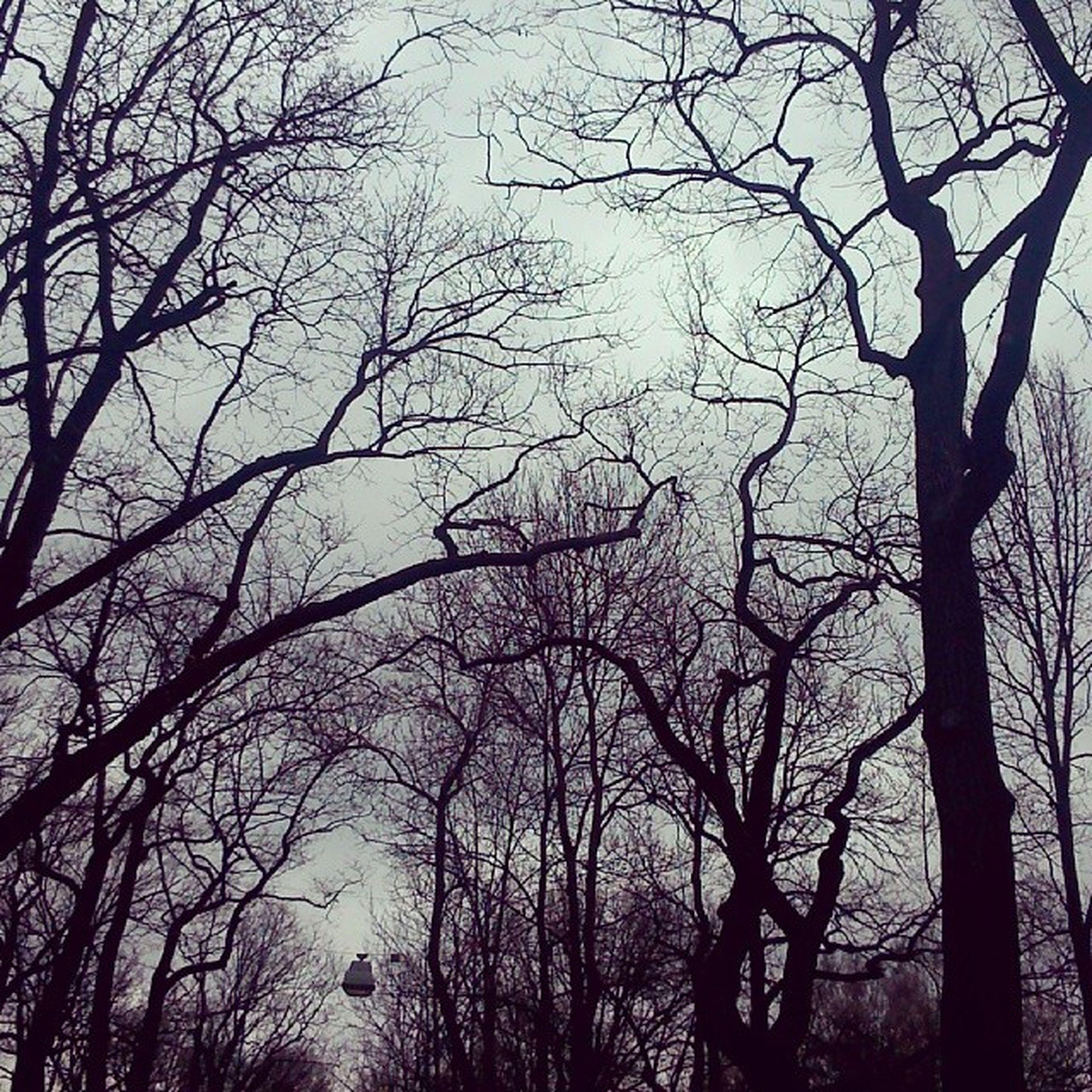 """Пушкин 8марта отличная_погода ветки жутко красиво вот вчера была такая """"замечательная """" погода,но она нисколько не помешала празднику :)"""
