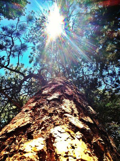 Trees Sunshine EyeEm Nature Lover EyeEm Best Shots - Trees