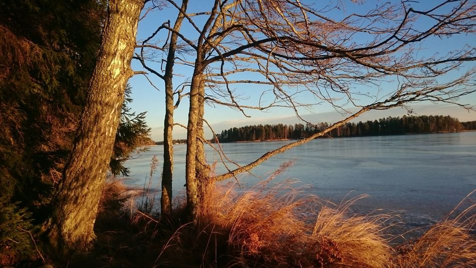 Water Reflection Nature Sky Tree Lake Beauty In Nature Outdoors Growth No People Tranquility Scenics Sunset Day Branch Ice Skating Storsjön Nordic Storsjön Sandviken Midwinter