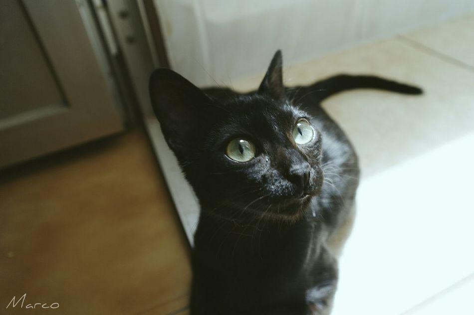 Gatos Cat Cats Catslover Ilovecat Catfeatures 7catdays Catslife Animals Pet Pet Photography  Pet Animal Catsagram Beautifulcat Fortune