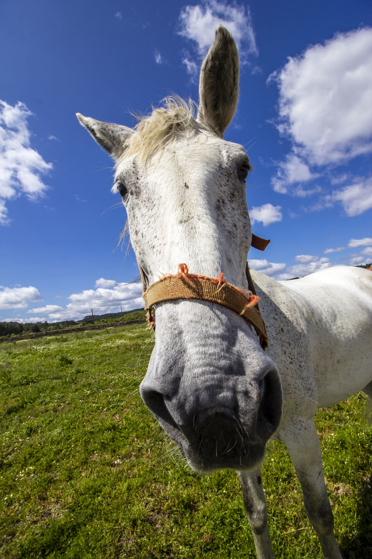 Animal Themes Close-up Day Domestic Animals Field Grass Landscape Mammal No People One Animal Outdoors Sky Worse  FUNNY ANIMALS Funny Faces Horse Photography  Angular Fisheye Portugal Face Grass Photography Grassfield Sky And Clouds Nature