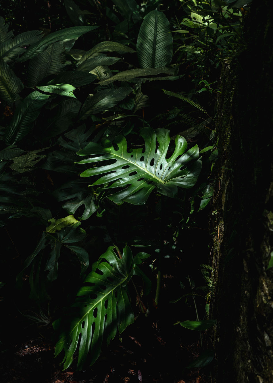 Abstract Photography Backgrounds Beauty In Nature Black Background Close-up Composition Constrast Day Fineartphotography Freshness Green Color Growth Leaf Leaves Light And Shadow Lush Foliage Nature Nature_collection No People Outdoors Plant Tree Xilitla Art Is Everywhere