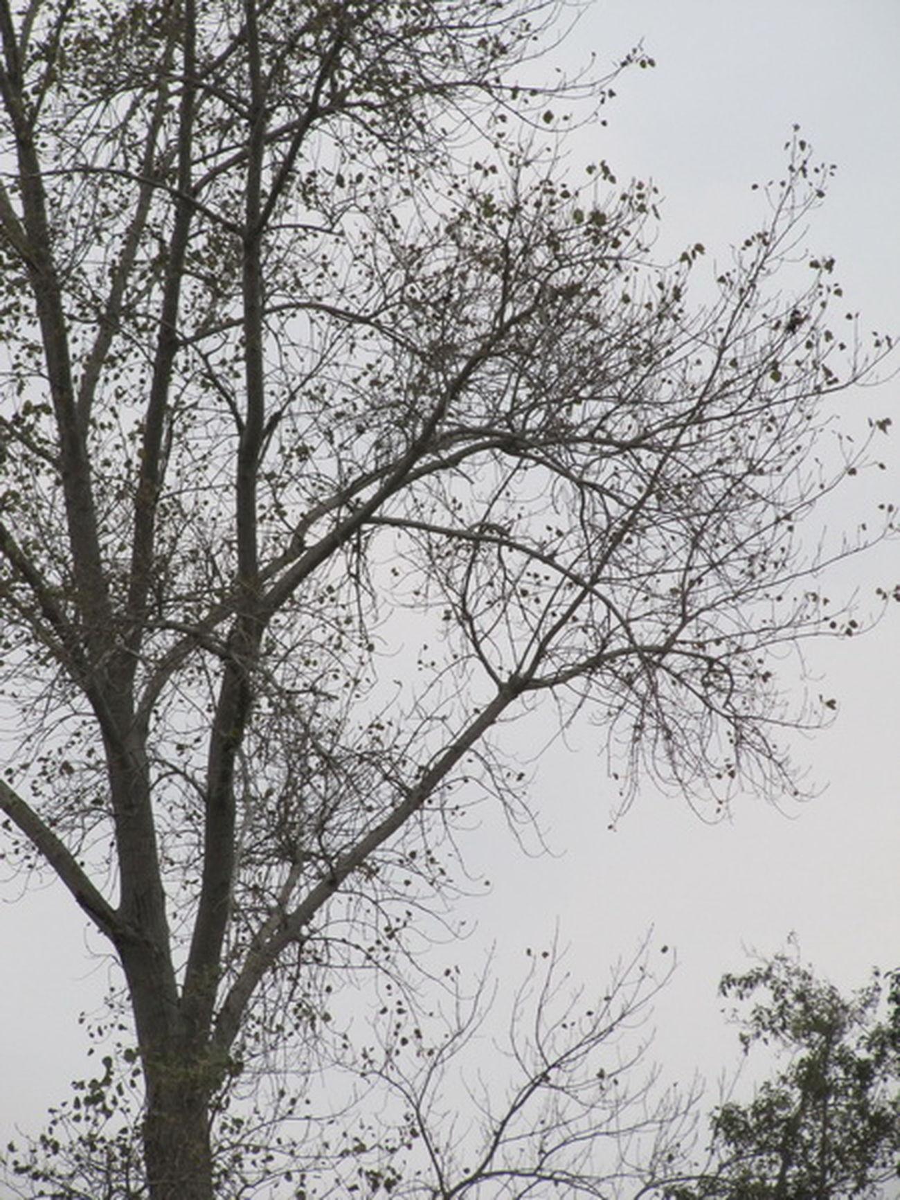 Autumn Tree Bare Tree Cloud Sky Sea And Sky Chalous Nowshahr Caspian Sea Iran Me