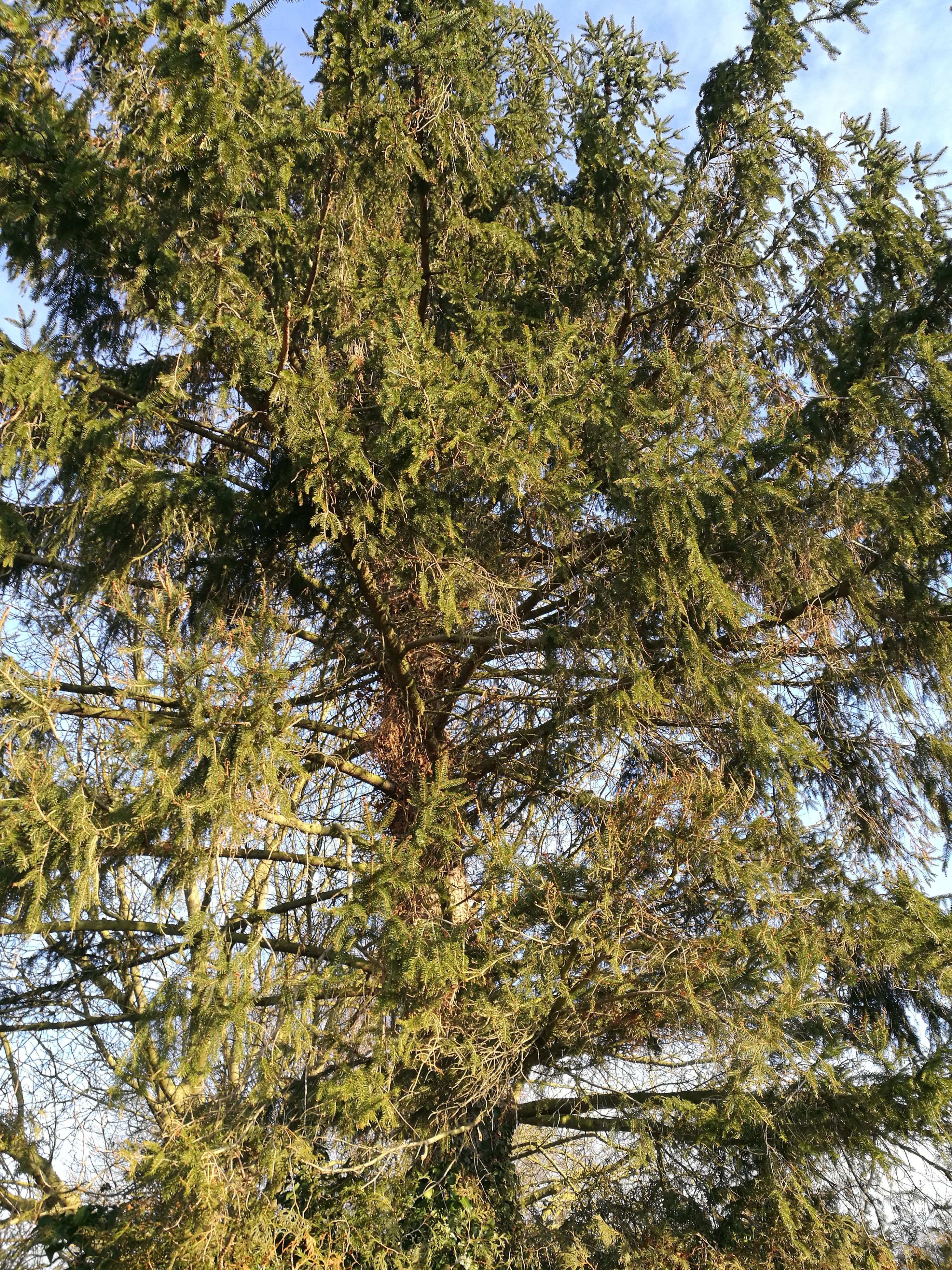 low angle view, growth, no people, tree, nature, full frame, backgrounds, green color, beauty in nature, day, outdoors, branch, sky