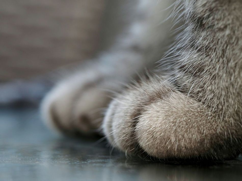 Beautiful stock photos of cat, Animal Body Part, Animal Leg, Animal Themes, Close-Up