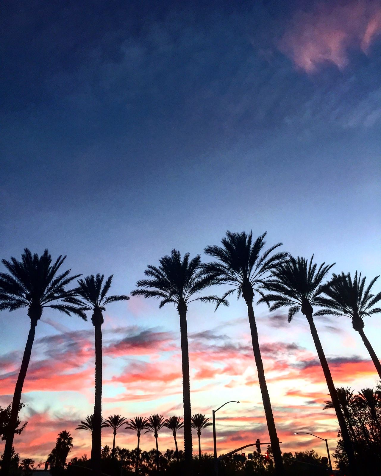 Palm Trees with beautiful view Palm Trees Sky And Clouds Sunset EyeEmNewHere