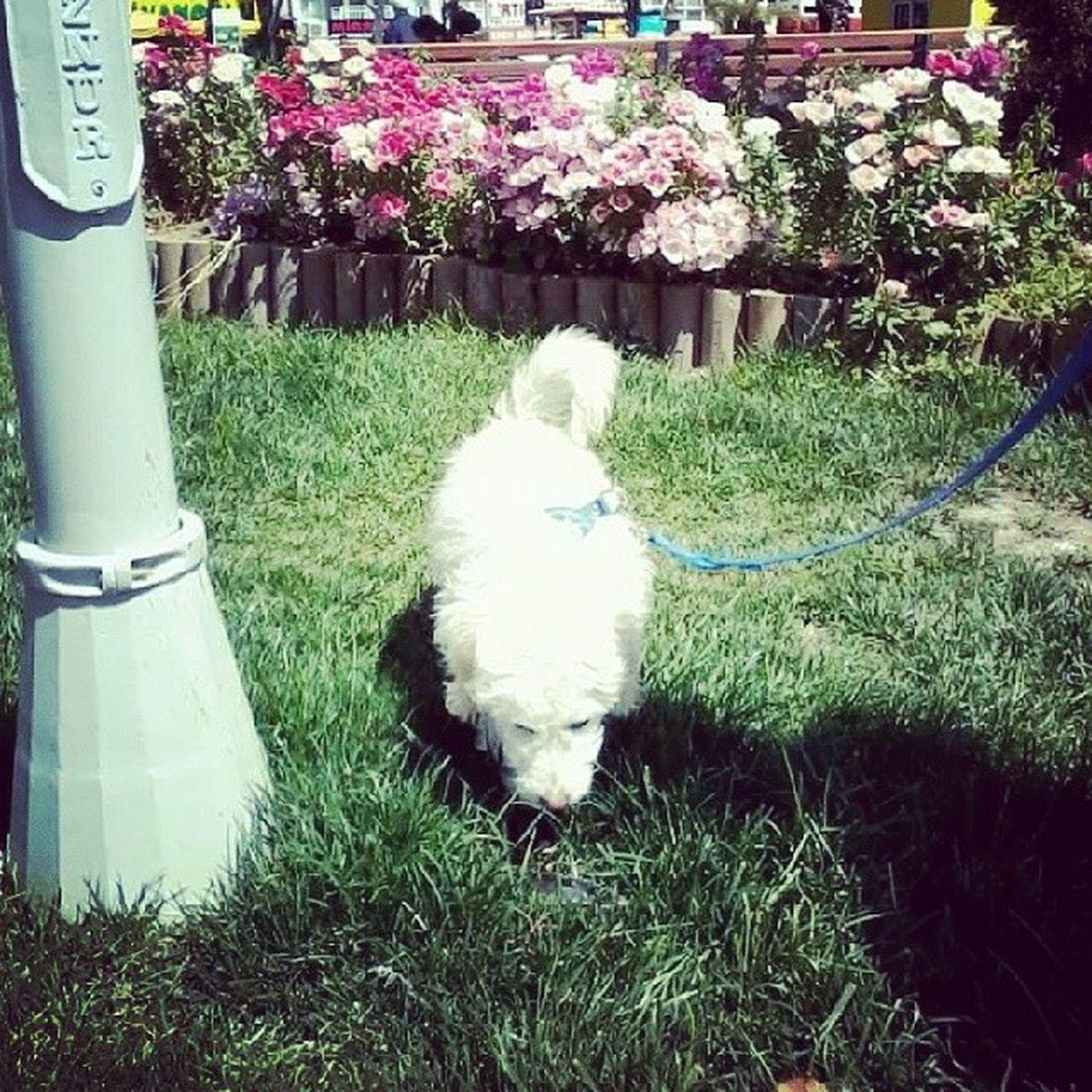 Follow Likes Cute LOL Dog Fındık