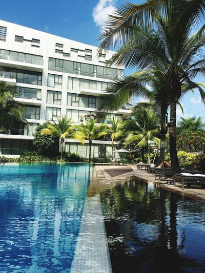 Water Palm Tree Architecture Built Structure Building Exterior Tree Swimming Pool Waterfront City Reflection Sky Day Reflectionatcappelbayview Blue Outdoors Modern