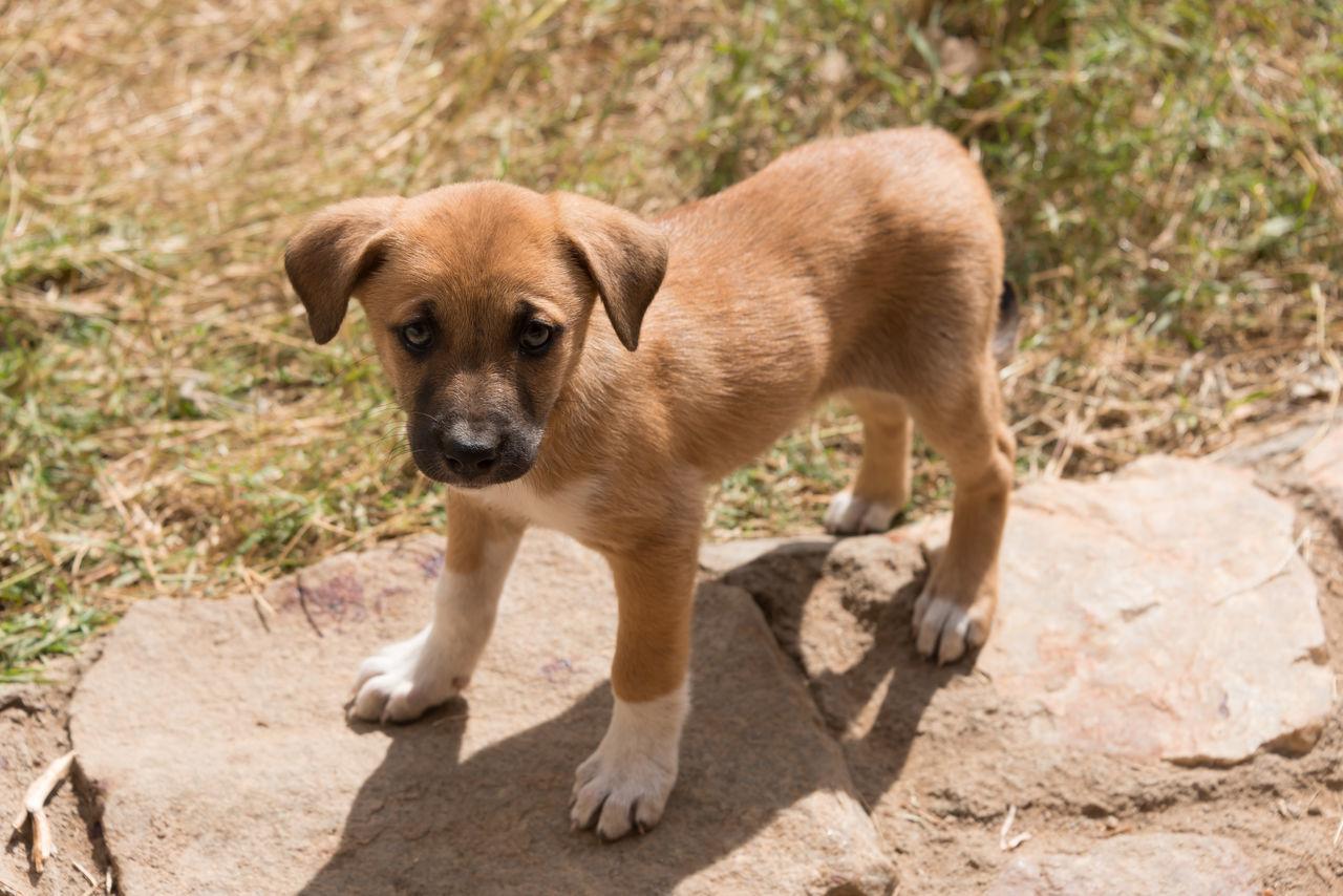 Portrait Of Cute Puppy Standing On Rock