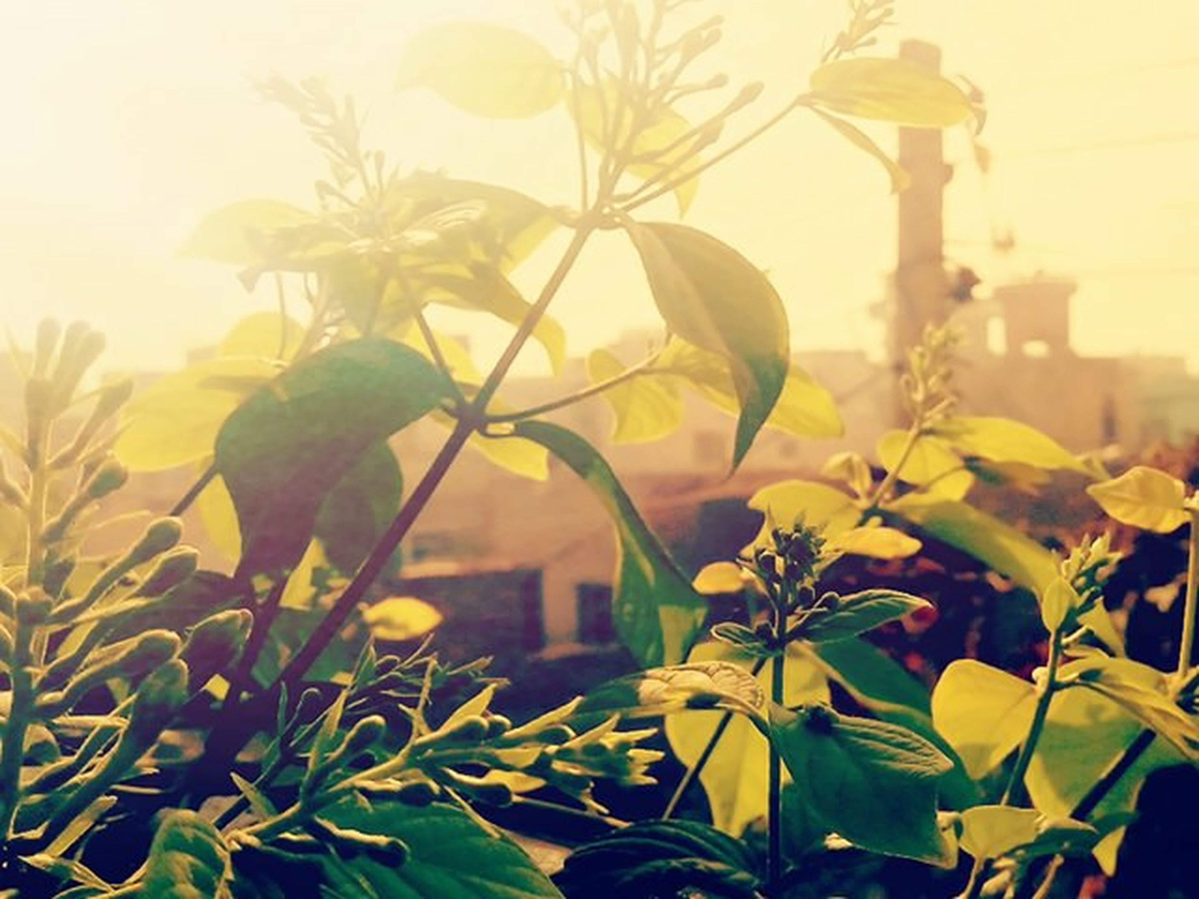 leaf, growth, plant, sunlight, focus on foreground, nature, close-up, sun, freshness, beauty in nature, sunbeam, green color, flower, outdoors, stem, no people, day, growing, fragility, front or back yard