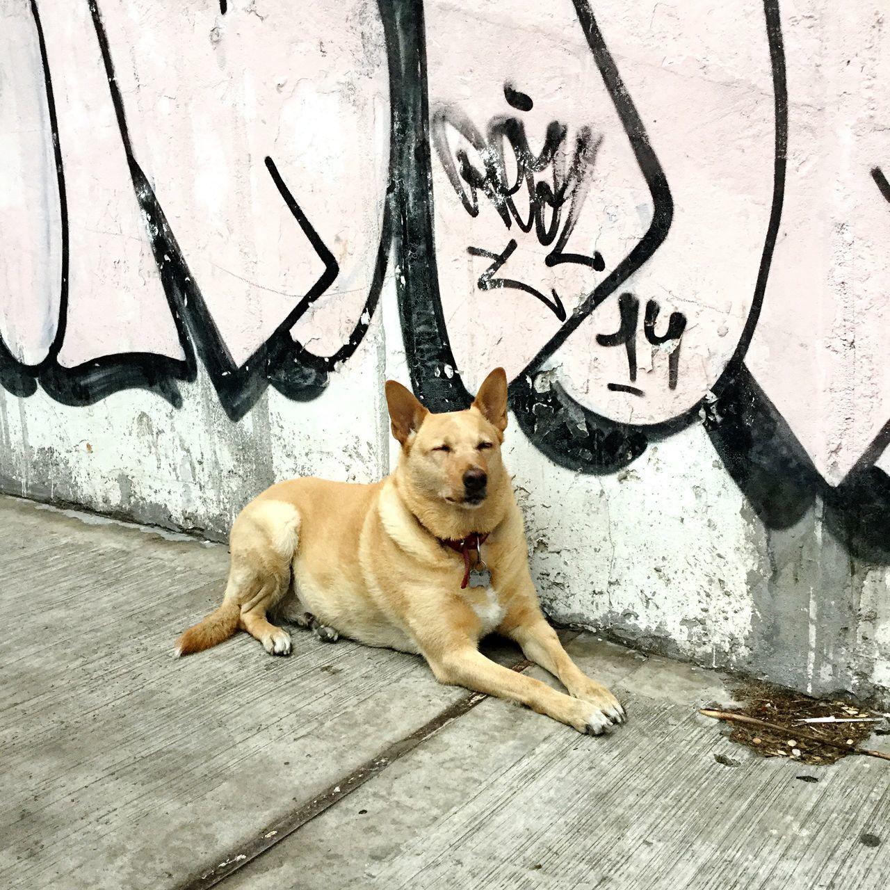 graffiti, one animal, pets, animal themes, text, outdoors, dog, sitting, domestic animals, mammal, sidewalk, day, relaxation, no people, portrait