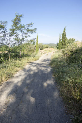 Bike Castellón Clear Sky Cycling Day Diminishing Perspective Grass Greenway Growth Landscape Nature Nature No People Ojos Negros Outdoors Plant Road Shadow SPAIN Sunlight The Way Forward Tree València Via Verde Way