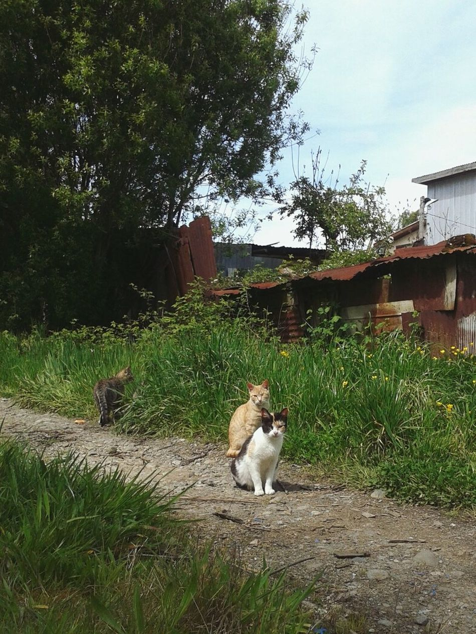 Cats Outdoors Springtime Furryfriend Cat No People