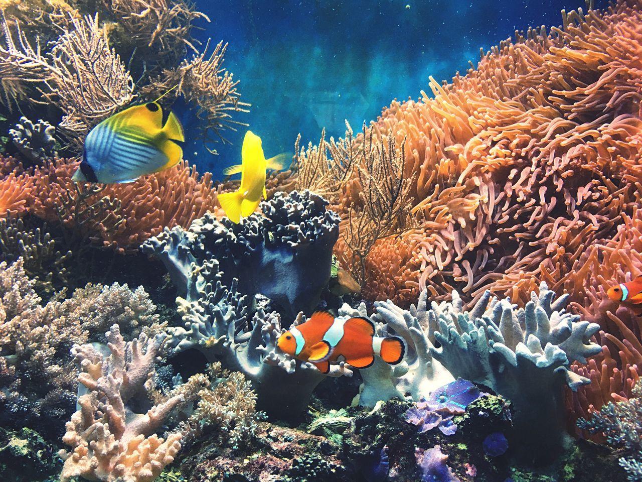Tierpark Underwater Coral Sea Life Fish UnderSea Water Clown Fish First Eyeem Photo