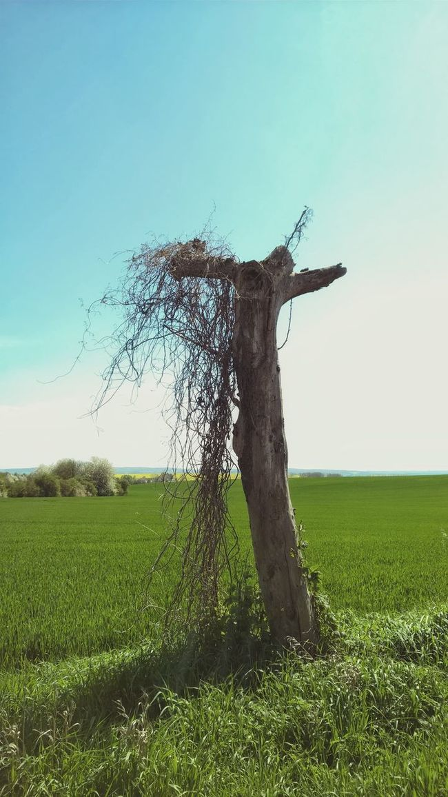 Blue Sky Lumiaphotography Lumia1520 Nokia  Mobile Photography Tree Germany🇩🇪 Sky_collection Outdoors Spring Springtime May Himmel Und Wolken Field Grass Fresh On Eyeem  Dead Tree Snag