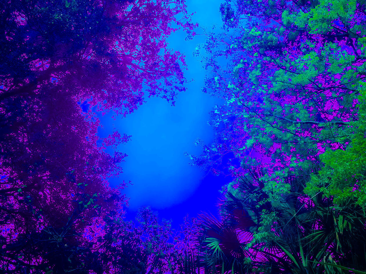 Dreaming Sky Blue Purple Tree Beauty In Nature Nature No People Growth Sky Outdoors Day Dreamy Daydream Dreamsky