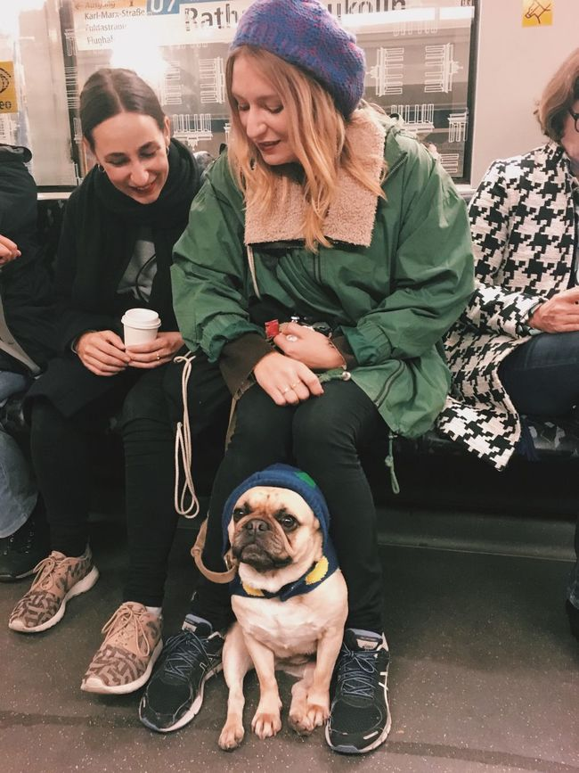 Togetherness Bonding Young Women On The Train Dog Pug Gangsta