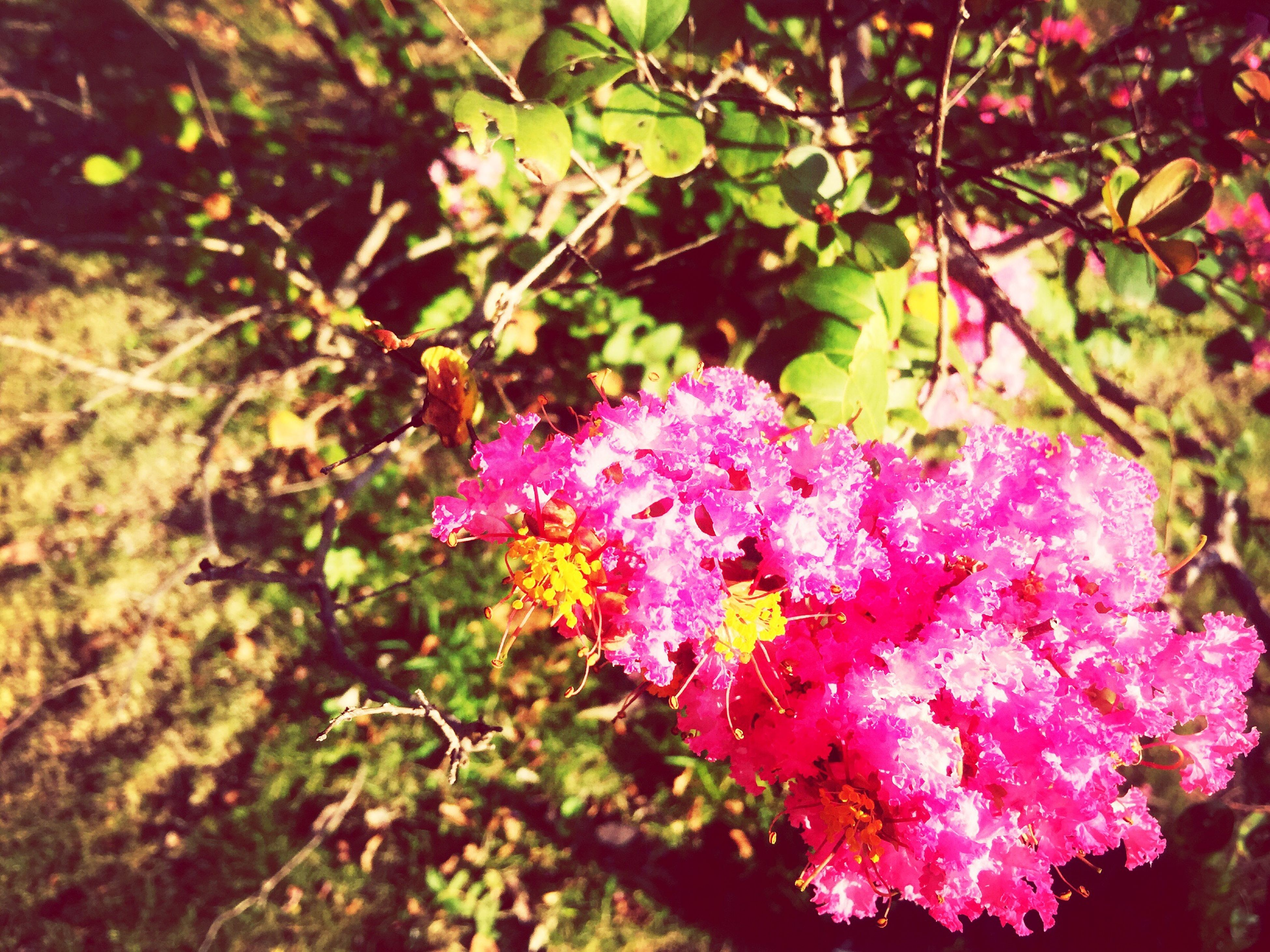 flower, growth, pink color, freshness, branch, tree, beauty in nature, nature, fragility, blossom, leaf, pink, in bloom, petal, blooming, outdoors, day, close-up, season, focus on foreground, no people, tranquility, botany, cherry tree, plant, selective focus, twig, growing, scenics, tranquil scene