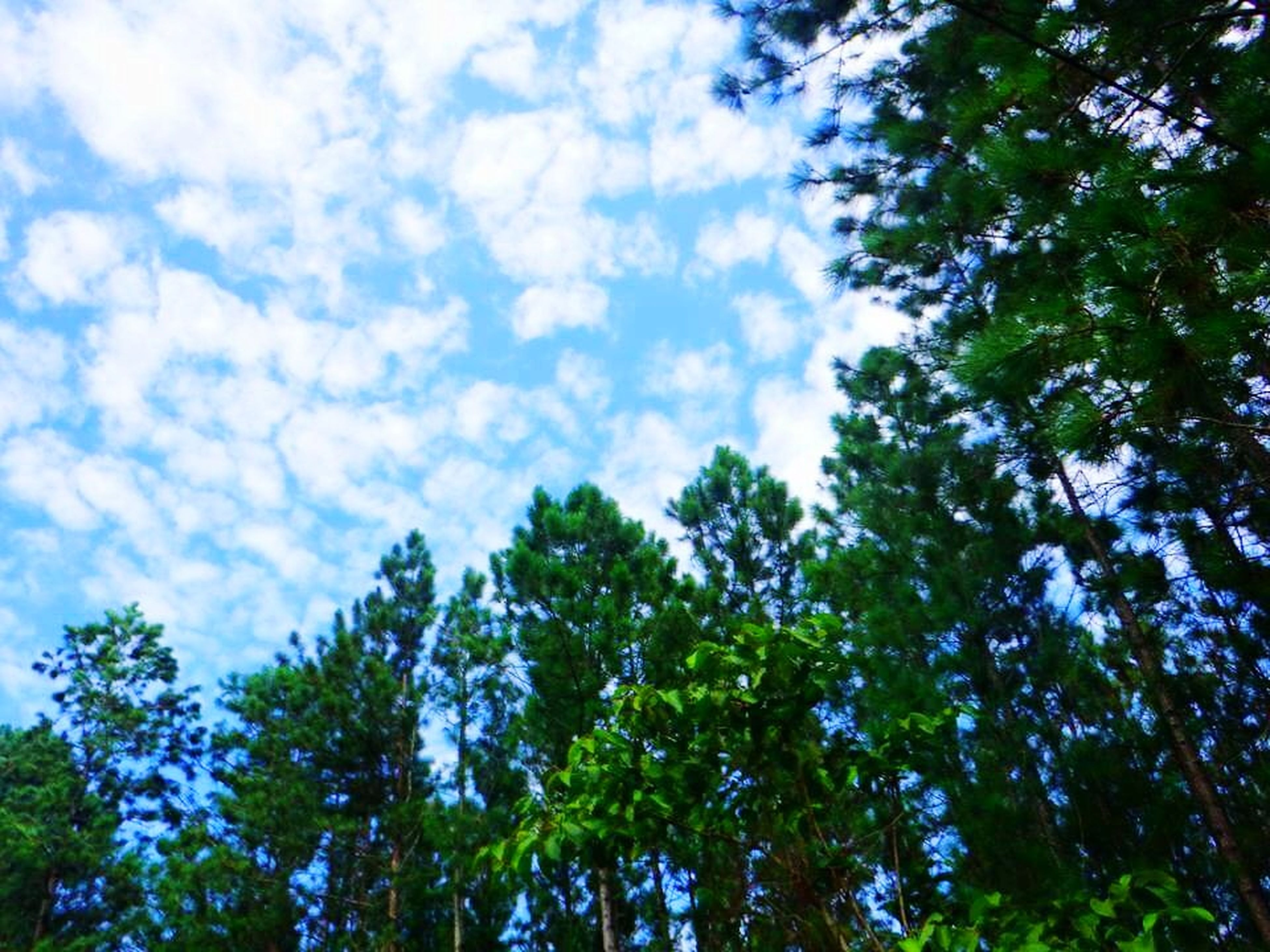 low angle view, tree, nature, beauty in nature, sky, growth, day, no people, forest, outdoors, cloud - sky, scenics, branch, freshness